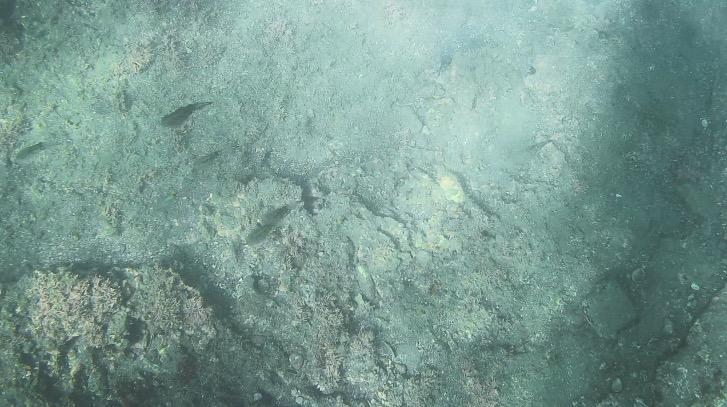 沖ノ島海水浴場でシュノーケリング