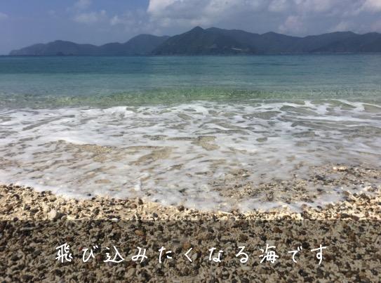 実久海岸水質